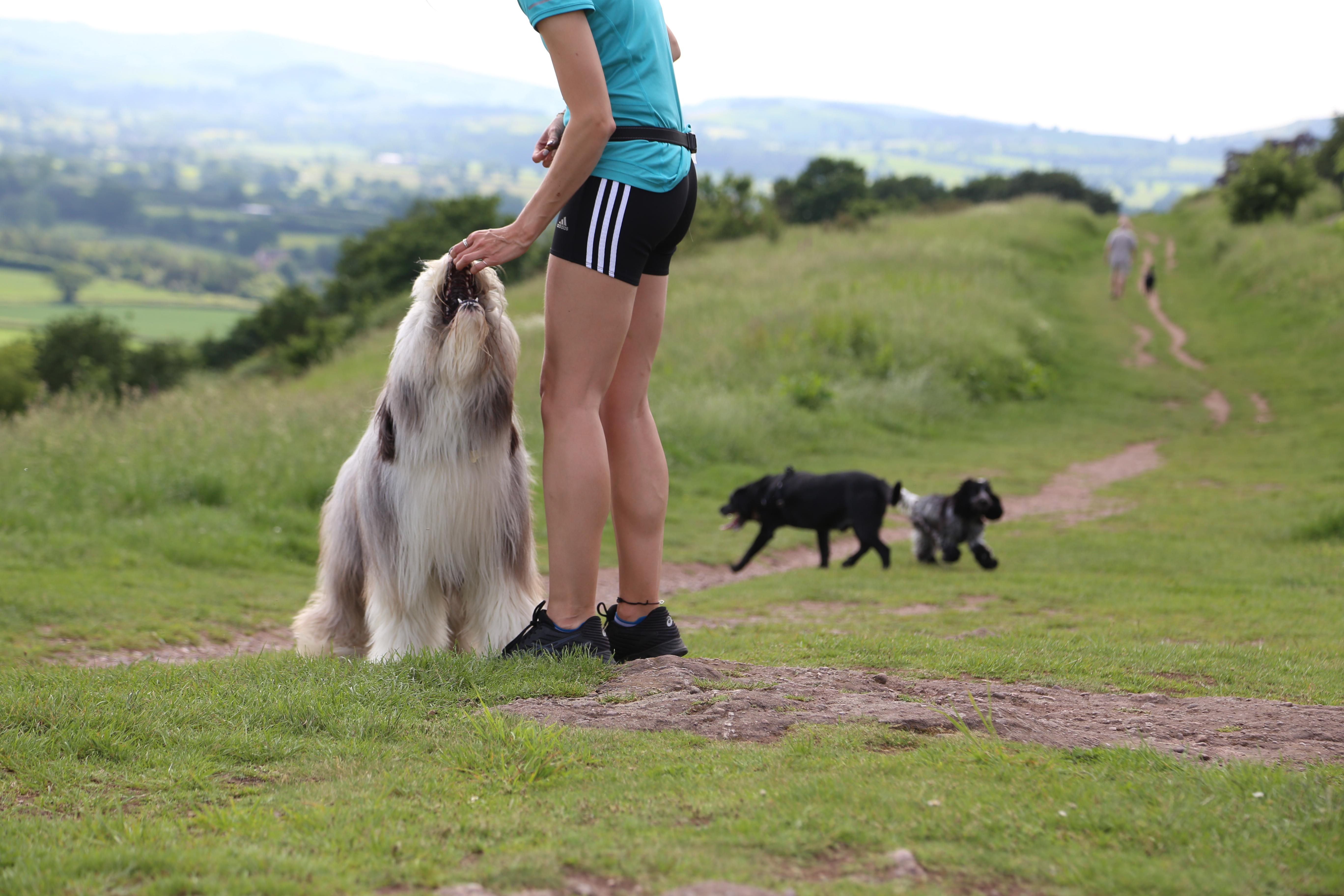 Drop-in Service | Dog Jogs