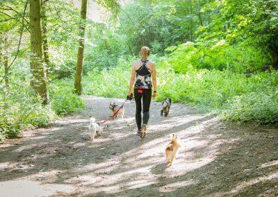 ADVENTURE WALK - dogs on hillside