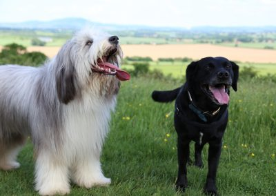 ADVENTURE WALKS - cloes up doggies