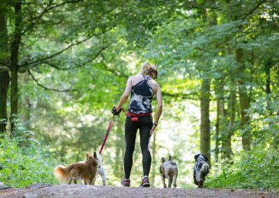 ADVENTURE WALKS - dogs in woods