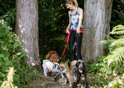 CONTACT US - dogs in woods