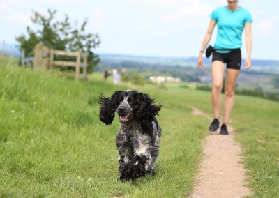 DOG JOGS - dogs running hill