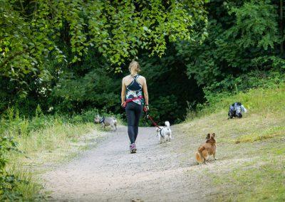 DROP INS - dog fast running